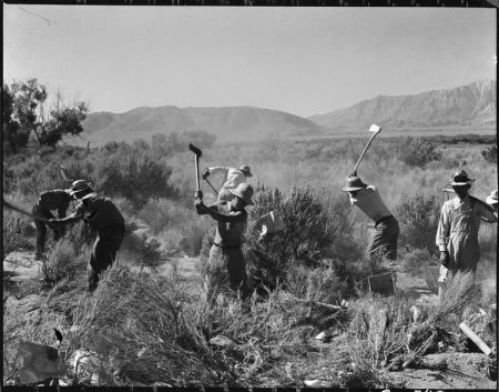 Manzanar Relocation Center, Manzanar, California. More land is being cleared of sage brush at the s . . .