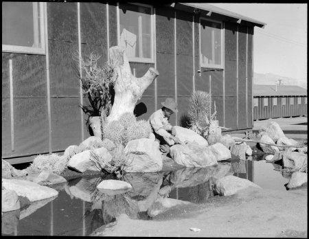 Manzanar Relocation Center, Manzanar, California. William Katsuki, former professional landscape ga . . .