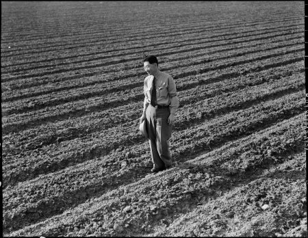 Mountain View, California. Henry Mitarai, 36, in one of his sugar beet fields on his mechanized far . . .